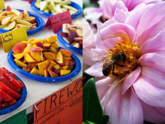 fruits and bee